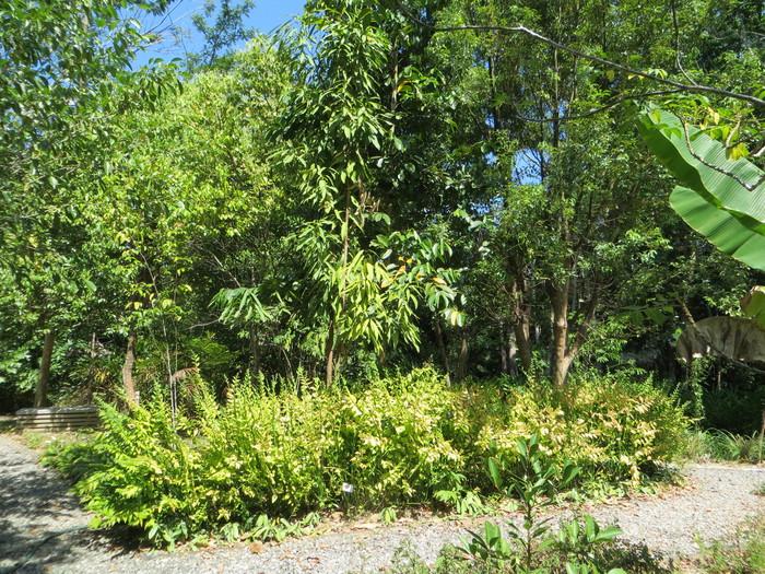 สวนสม นไพรนาต น Natin Y Garden